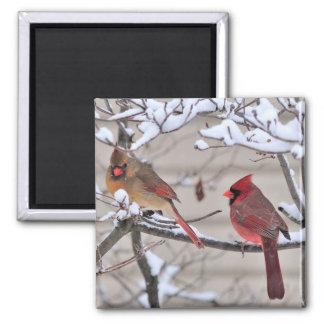 El imán hermoso muestra a cardenales rojos en la n