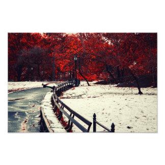 El invierno resuelve la caída en Central Park, NYC Cojinete