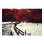 El invierno resuelve la caída en Central Park, NYC Impresiones Fotograficas
