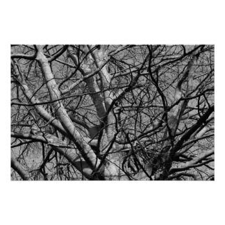 El invierno Sunlit ramifica (B&W) Póster