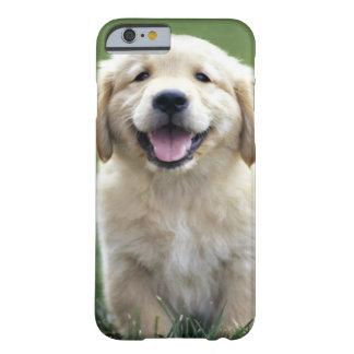 el iPhone 6 caseGolden el iPhone del perrito del