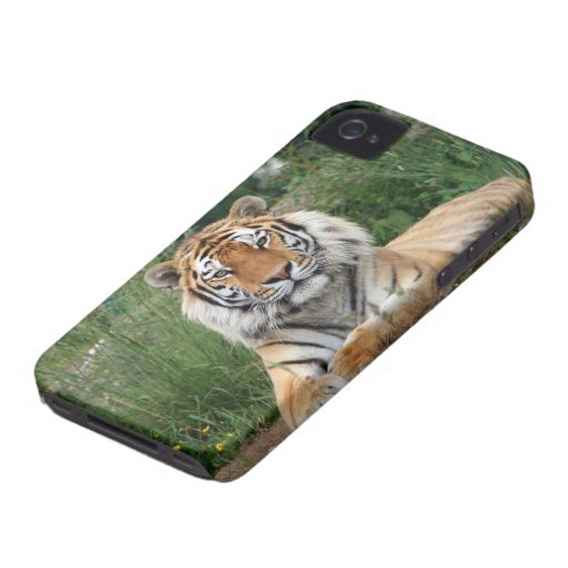 El iphone hermoso principal 4 de la foto del tigre iPhone 4 carcasa