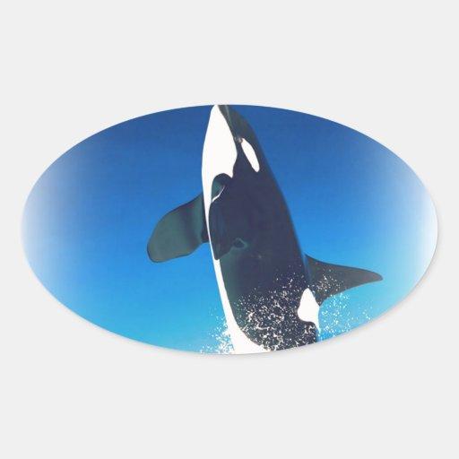 El ir para la orca de la infracción pegatina ovalada