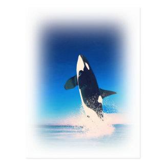 El ir para la orca de la infracción tarjeta postal