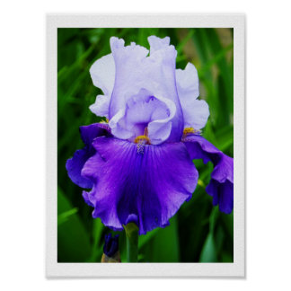 El iris alegre poster