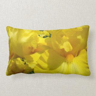 El iris amarillo de las almohadas de tiro florece