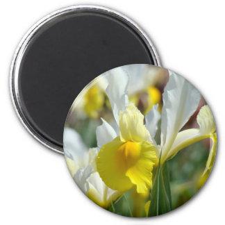 El IRIS AMARILLO FLORECE los imanes florales de Imán Redondo 5 Cm