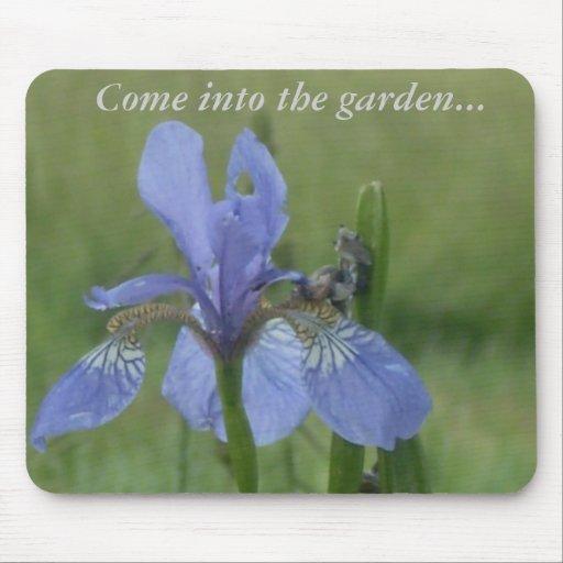 El iris azul, entra en el jardín… tapetes de ratones