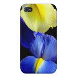 El iris azul y amarillo florece 4b iPhone 4/4S funda