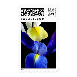 El iris azul y amarillo florece 4b sello