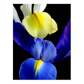 El iris azul y amarillo florece 4b tarjetas postales