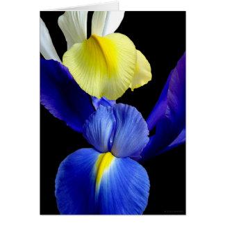 El iris azul y amarillo florece 4b tarjetas