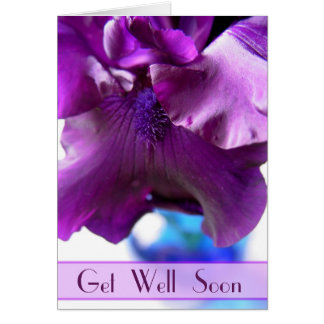 El iris barbudo púrpura consigue pronto la tarjeta