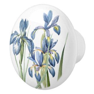 El iris de Redoutes florece botánico floral Pomo De Cerámica