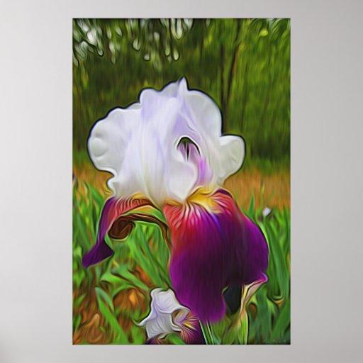 """El """"iris de Sally """" Impresiones"""