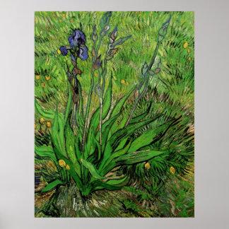 El iris de Vincent van Gogh Posters
