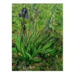 El iris de Vincent van Gogh Tarjetas Postales