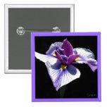 El iris púrpura más azul pins