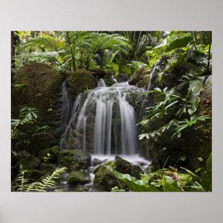 El jardín botánico tropical de Fairchild es las 33 Impresiones