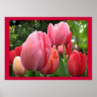 El jardín del tulipán de la primavera rosada y póster