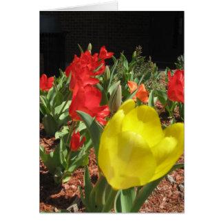El jardín del tulipán tarjetas