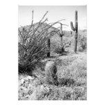 El jardín del vaquero (desierto de AZ Sonoran) inv