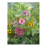 El jardín florece como margarita, zinnia, amapola, tarjetas postales
