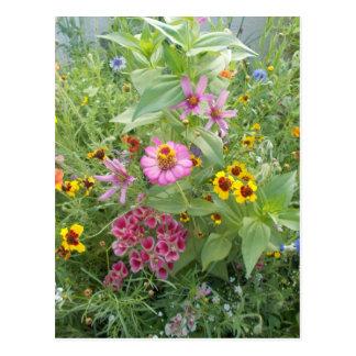 El jardín florece como margarita, zinnia, amapola, postal