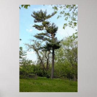El jardín Philadelphia de Bartram del árbol Póster