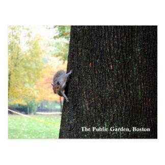 El jardín público, Boston Tarjeta Postal