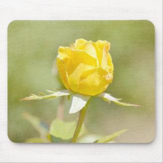 El jardín romántico florece el rosa amarillo alfombrillas de ratones