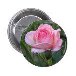 El jardín rosado subió 2 pin