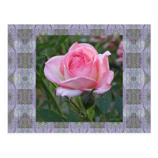 El jardín rosado subió 3 tarjetas postales