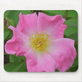 El jardín rosado subió florece los rosas de alfombrilla de raton