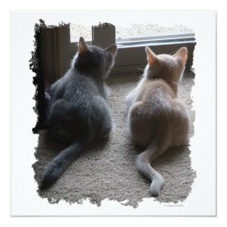 """El jaspe y el gatito de Kaylee invita Invitación 5.25"""" X 5.25"""""""