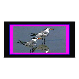 El jGibney Birds2CocoaBeach1 de la serie del Tarjeta Fotográfica