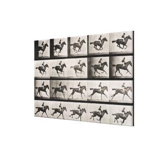 El jinete en un caballo galopante, platea 627 de ' lienzo envuelto para galerías