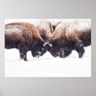 El Juego-Luchar de los búfalos Impresiones