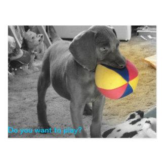 El jugar azul del perrito de Weimaraner Tarjetas Postales