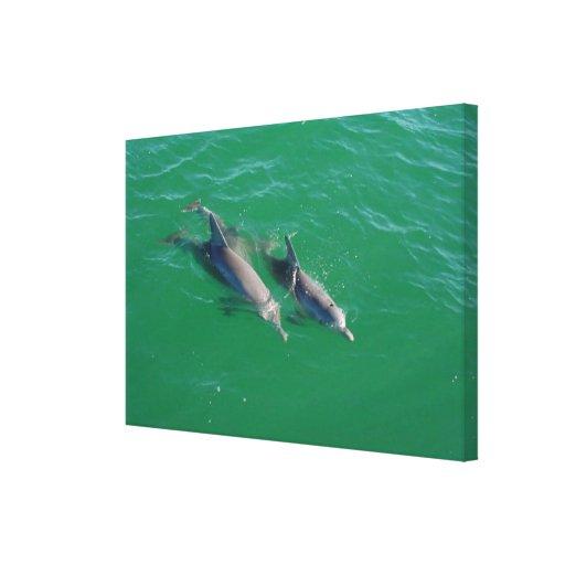 El jugar de los delfínes impresion de lienzo