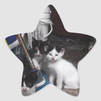 El jugar de los gatitos calcomanía forma de estrella
