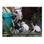 El jugar de los gatitos tarjetas postales