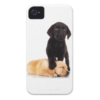 El jugar de los perritos del labrador retriever Case-Mate iPhone 4 cárcasas