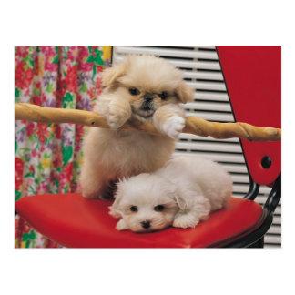 El jugar de los perritos postal