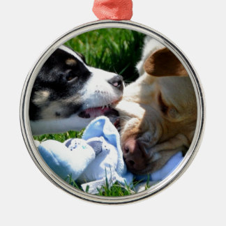 El jugar de los perros ornatos