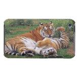 El jugar de los tigres de Bengala Barely There iPod Protectores