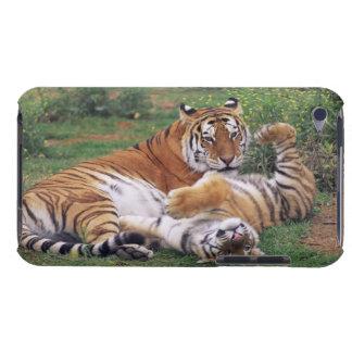 El jugar de los tigres de Bengala iPod Case-Mate Cobertura