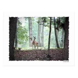 El jugar en las maderas tarjetas postales