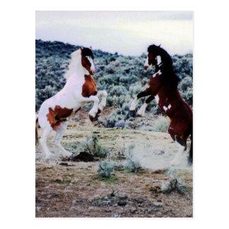 El jugar joven de dos caballos tarjeta postal