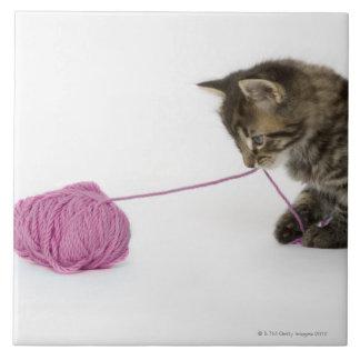 El jugar joven del gatito del tabby azulejo cuadrado grande